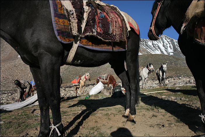 Trekking-Pferde