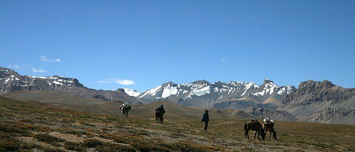 150905-4994-pferde