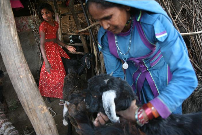 Garrasiya Mullibai kümmert sich um die Ziegen